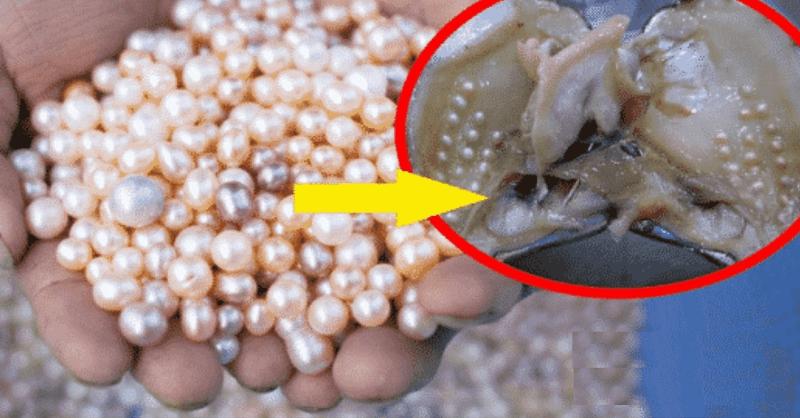 Pearl farming information
