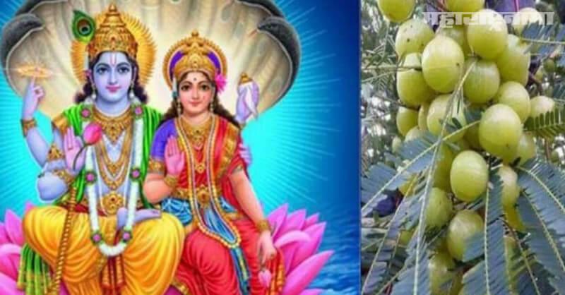 Amla Navami 2020, Akshaya Navami, Importance of the day