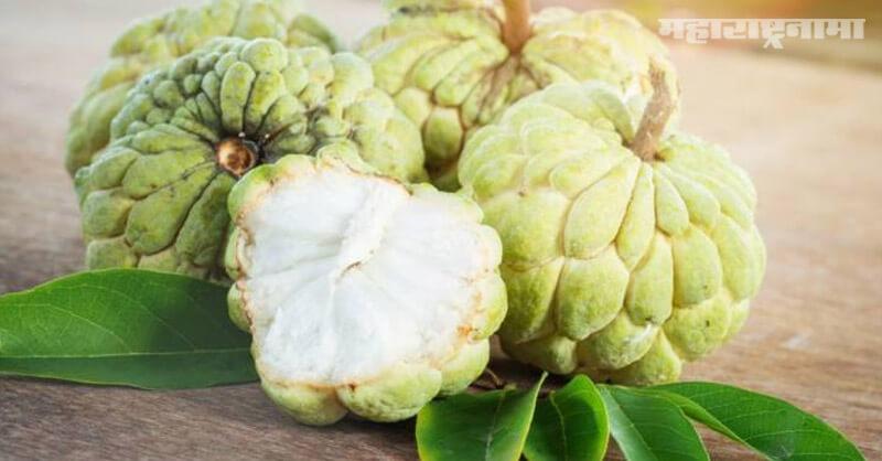 Benefits, Eating custard apple, health article