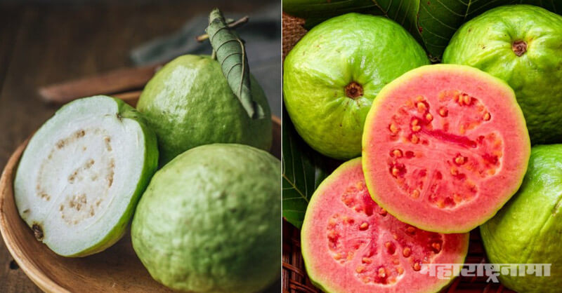 Eating Guava, Winter season, health benefits
