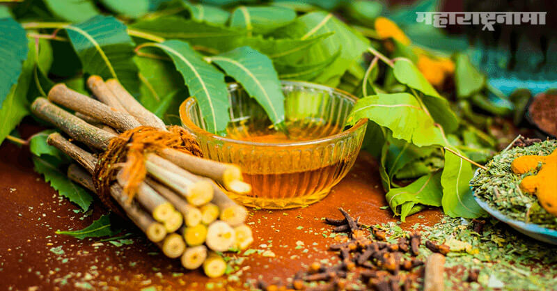 Neem benefits, diseases, Cancer, health Article