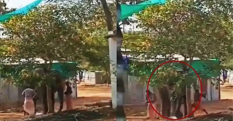 Viral video, cruel mahouts, beat elephant, Coimbatore Tamil Nadu