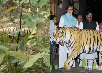tiger found in dead condition at bhandara forest