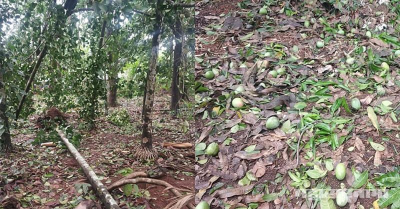Nature Cyclone, Konkan, Raigad, Ratnagiri, Sindhudurga