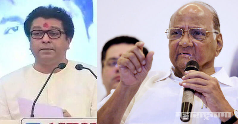 National congress party, maharashtra navninrman sena, mns, ncp, raj thackeray, sharad pawar, narendra modi, bjp
